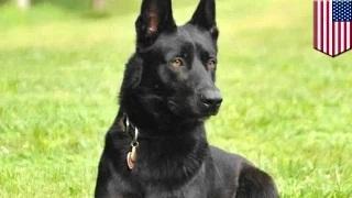 Dog saves police officer after men ambush him in Pearlington, Mississippi rest stop