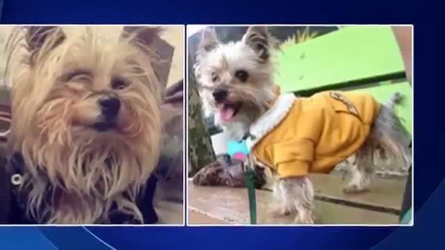 Atlanta Falcons player Prince Shembo accused of killing Dog