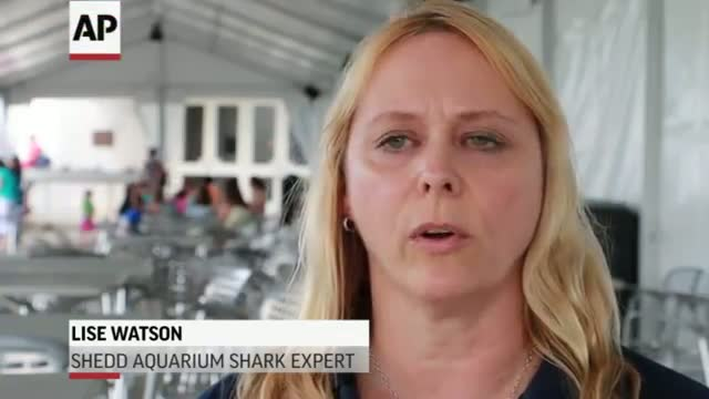 Expert: Shark Attack Beach Should Close Briefly
