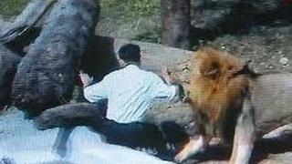 Animals attacking people Animal Attacks On Humans Most Shocking Attacks Caught On Tape