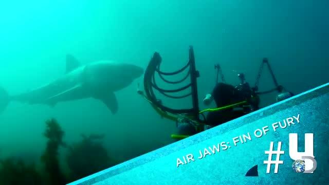 Giant Shark Circles the WASP