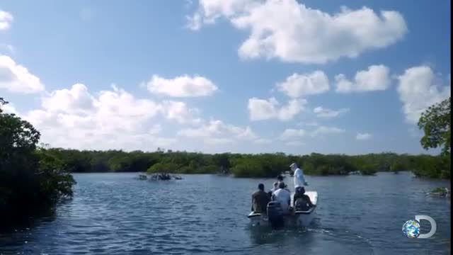 Sharks of Cuba: Why Sharks Are Important to Reefs - Shark Week 2015 Video
