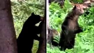 When animals attacks caught on tape full episodes Shocking Bear Attack