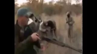 Lion attacks hunter in africa animals attacking humans compilation