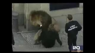 Animals attacking people When animals attack Compilation animals attack humans