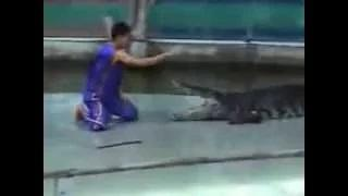 Crocodile attacks human crocodile attacks man animals attack humans