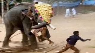 Elephant attack in kerala forest Scary elephant attack must watch this video