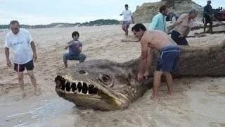 10 sea Creatures You Won't Believe Exist