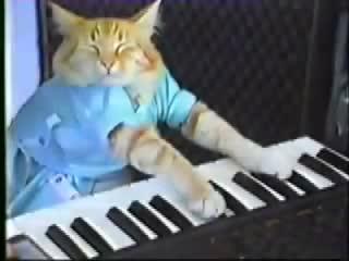 Keyboard Cat! - THE ORIGINAL!