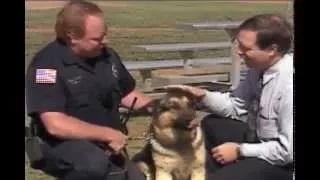 Wild animal attacks people Untamed and Uncut Attack Dog Bites Reporter