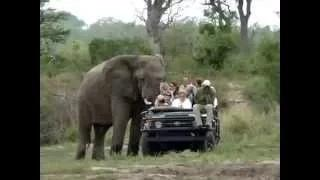 Animals attacking people Near Death Experience!!