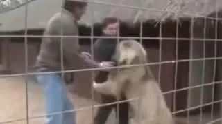 Crazy animals attack humans Most Shocking crazy animals attack humans Caught On Tape Bear attacks