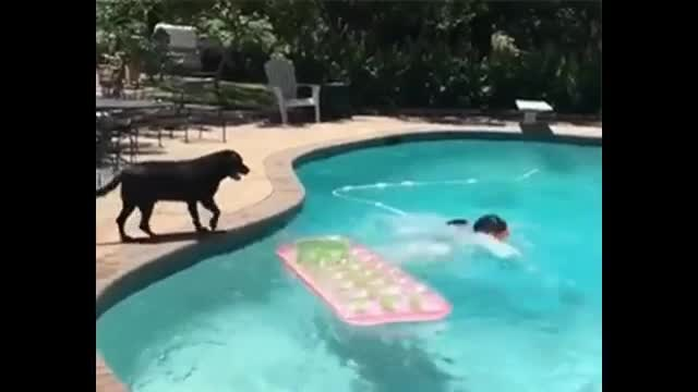 Dog Jumps on $exy Girl in Swimming Pool | Whatsapp Funny Videos