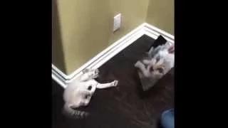 Cat Afraid of Cat Picture