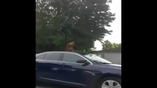 Monkey On The Loose In Orlando Suburb
