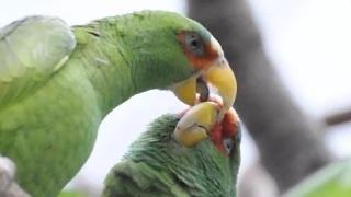World's 10 Most Bizarre Animal Mating Rituals