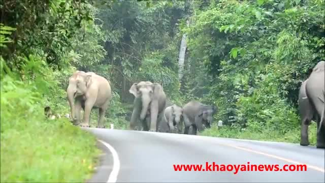 Elephant herd Attacks Motorbike | Amazing