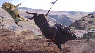 Big Battle Lion vs Buffalo - Real Fight