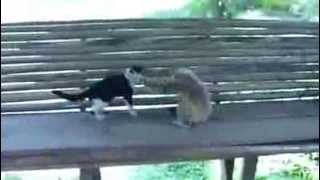 Cat and Monkey Funny Animal Video
