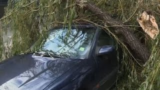 Strong Winds Down Trees In Poland