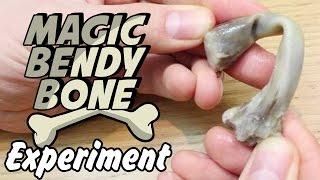 Magic Bendy Bone - Bend a Chicken Bone Science Experiment !!