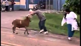 Animals Attacking Humans Compilation