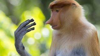 Weird Animals You Won't Believe Exist - Strange Animals on Earth