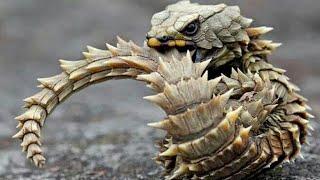 World's TOP 29 Strange Animals Monsters