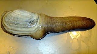 Top 10 Weirdest Most Bizarre Animals Found