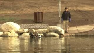 Raw: Divers Return to San Bernardino Lake