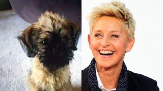 """Ellen DeGeneres and Portia de Rossi Finally Have a """"Kid""""!"""