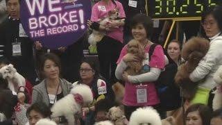 Dog yoga creates world record, 270 dogs performs yoga in Hong Kong