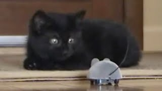 Epic Funny Scared Cats Compilation! Epic Funny Cats!