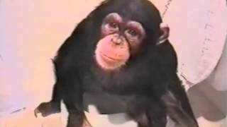 Funny Video || Monkey Uses the Toilet