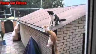 Watch Cats Jump Fail Compilations So Funny Video Id
