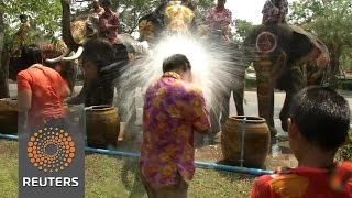 Water fight with elephants in Thailand