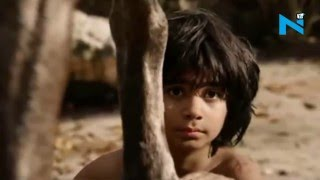 'The Jungle Book' becomes 2nd highest Hollywood opener in India