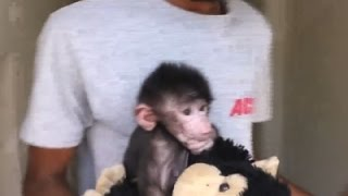 Raw: Indian Zoo Cares for Abandoned Baby Baboon