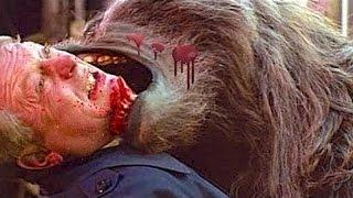 Bear vs Human vs Rhino