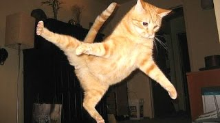 Funny Cats - A Funny Cat Videos Compilation 2015