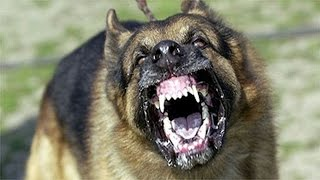 Worlds Top 10 Most Dangerous Dogs - Aggressive Dogs - Strongest Dogs - Chop Busters