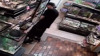 Raw: In Theft Attempt Man Shoves Python in Pants