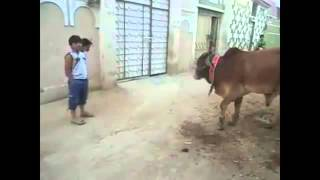 Whatsapp Funny Videos India - Funny Indian Whatsapp Videos Compilation