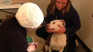 Flint's Water Crisis Takes Toll on Pets