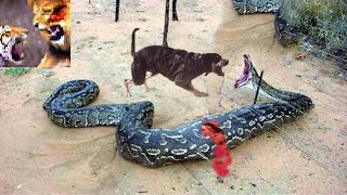 Top 10 Animals Fight - Real Fight video - id 371994967437