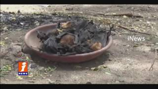 Bats dead with heavy summer heat In Palwancha Khammam district iNews