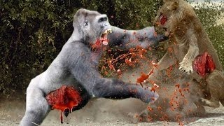 15 CRAZIEST Animal Fights Caught On Camera - Lion,Buffalo,crocodile,Elephant, Bear,Lion