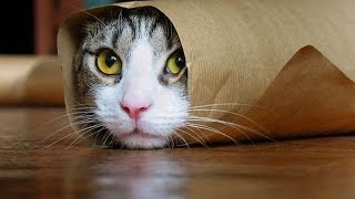 Funny Cats Compilation [Most See] Funny Cat Videos Ever Part