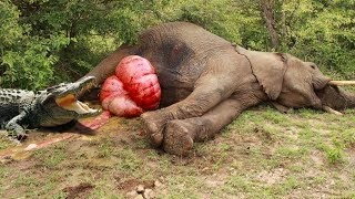 Most Amazing Wild Animal Attacks - CRAZIEST Animal Fights - lion,,anaconda, deer, Crocodile