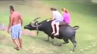 Latest Indian Funny Videos Compilation 2016 - Indian Whatsapp Videos - Videos De Risa 2016